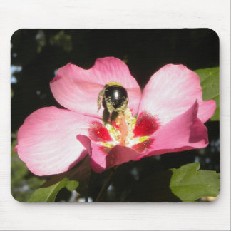 Bee on a Rose of Sharon mousepad