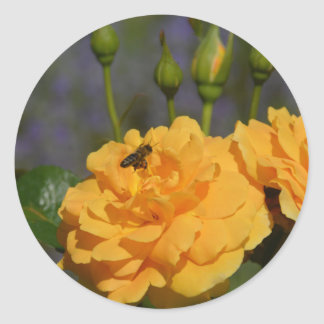 Bee on a rose classic round sticker
