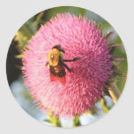 Bee on a Thistle Bloom Round Stickers