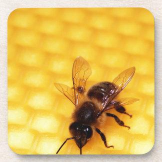 Bee on a wax beverage coaster