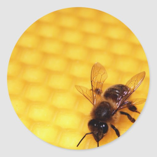 Bee on a wax round sticker