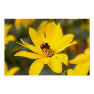 Bee on a Yellow Flower Print Poster