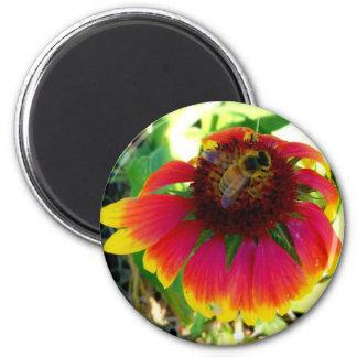 Bee on an Orange Dazzler Blanket Flower 2 Inch Round Magnet