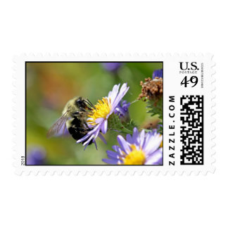 Bee on Aster Flower Photo Postage Stamp