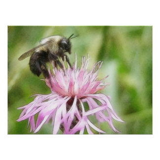 Bee On Bachelor Button Posters