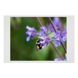 Bee On Blue Blossom