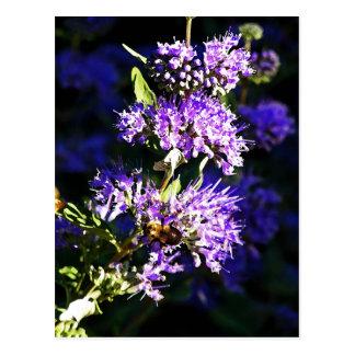 Bee on Butterfly Bush - Lavender Flowers Postcard