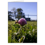 Bee on Clover Notecard Greeting Card