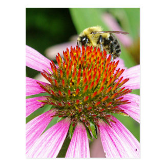 BEE ON CONE FLOWER POSTCARD