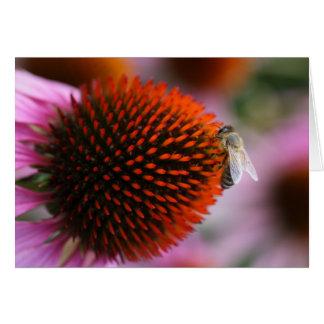 bee on coneflower card