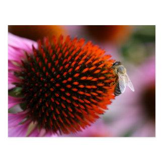 bee on coneflower postcard