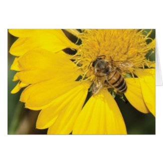 Bee on daisy blank card