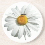 Bee on Daisy Cute Floral Photo Drink Coaster
