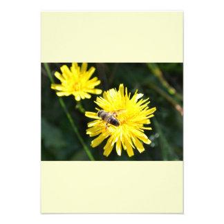 Bee on dandelion - beautiful greeting map