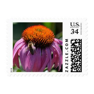 Bee on Echinacea Flower Postage