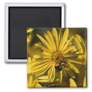 Bee on flower 2 inch square magnet