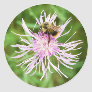 Bee on Flower Blossom Classic Round Sticker