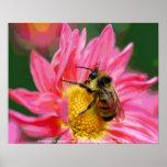 Bee On Flower Digital Art Poster Print