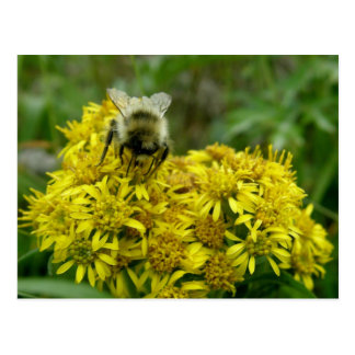 Bee on Goldenrod, Unalaska Island Postcards