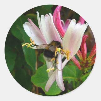 BEE ON HONEYSUCKLE Stickers