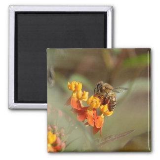 Bee on Lantana Magnet