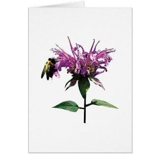 Bee on Lavender Bee Balm Cards