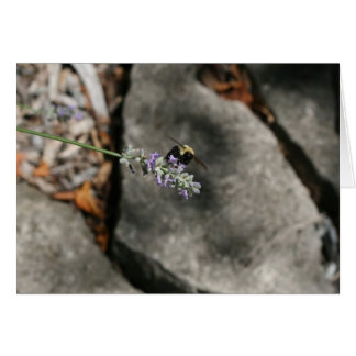 """""""bee on lavender"""" by Larry Coressel Card"""