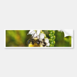 Bee on Lucky White Heather Bumper Sticker