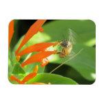 Bee on Orange Flower Magnet