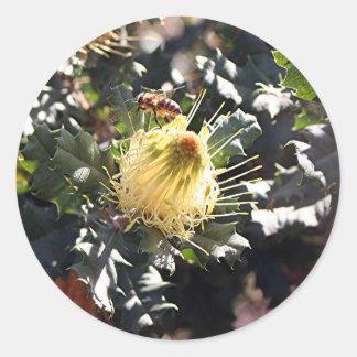 Bee on pale yellow Australian dryandra flower Classic Round Sticker