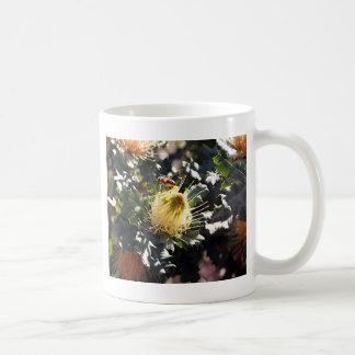 Bee on pale yellow Australian dryandra flower Coffee Mug
