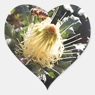 Bee on pale yellow Australian dryandra flower Heart Sticker