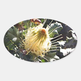 Bee on pale yellow Australian dryandra flower Oval Sticker