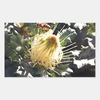 Bee on pale yellow Australian dryandra flower Rectangular Sticker