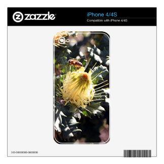 Bee on pale yellow Australian dryandra flower iPhone 4S Decal