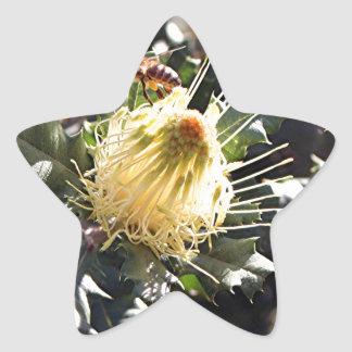 Bee on pale yellow Australian dryandra flower Star Sticker