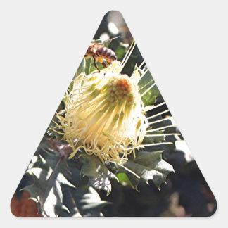 Bee on pale yellow Australian dryandra flower Triangle Sticker