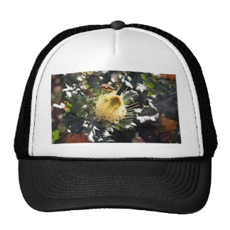 Bee on pale yellow Australian dryandra flower Trucker Hat