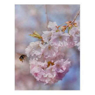 Bee on Pink Blossom Postcard