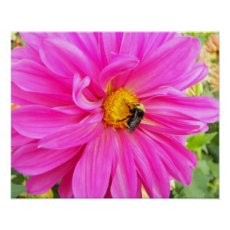 Bee on Pink Dahlia Floral Poster
