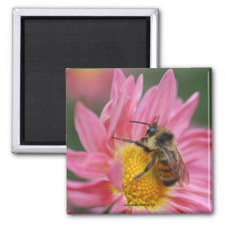 Bee On Pink Daisy Flower Photo Magnet