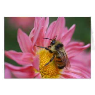 Bee On Pink Daisy Flower Photography Card