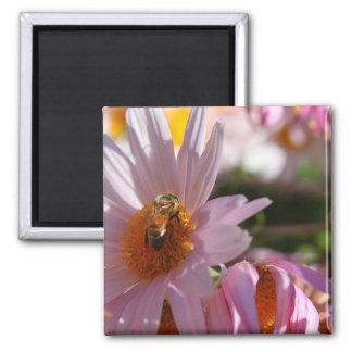 Bee on Pink Flower Refrigerator Magnets