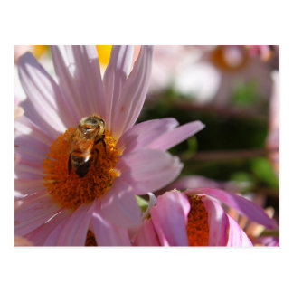 Bee on Pink Flower Post Cards