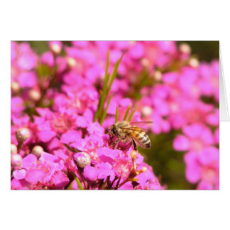 Bee on pink flowers card