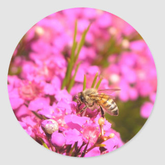 Bee on pink flowers classic round sticker