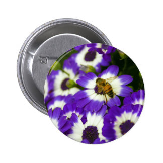 Bee on purple cinerarias buttons