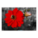 Bee on Red Flower Poster