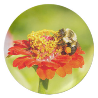 bee on red flower with pollen sacs dinner plate