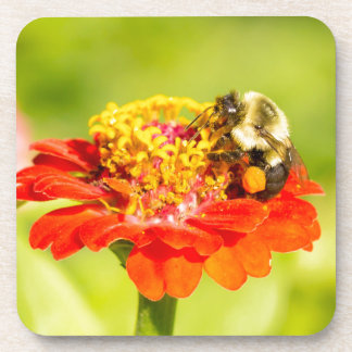 bee on red flower with pollen sacs drink coaster